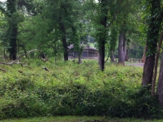 The park is very green in the springtime